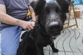 RqueR Adoptando en Eivissa logra la adopción de 25 animales desde febrero