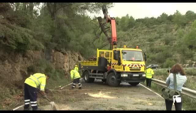 VÍDEO: Un tornado derriba pinos en la carretera de sa Cala, cortada al tráfico por 2 horas