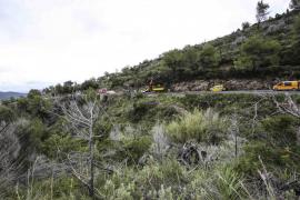 Un tornado derriba pinos en la carretera de sa Cala de Sant Vicent
