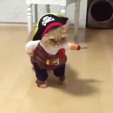 El gato pirata, fenómeno viral en las redes