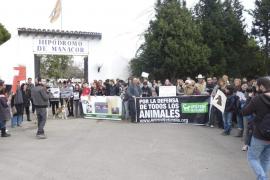 Protesta por la muerte de un caballo