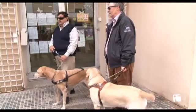 VÍDEO: Unos perros con mucha vista