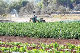 Los agricultores solicitan al Govern que  les exima de las restricciones de agua