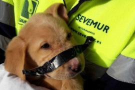 Encuentran un cachorro abandonado con cinta aislante en el hocico en un contenedor