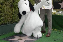 Snoopy, el primer beagle con estrella en el Paseo de la Fama