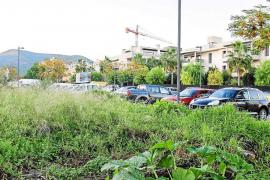 El mosquito tigre se instala en Sant Antoni y detectan larvas en zonas urbanas de Vila