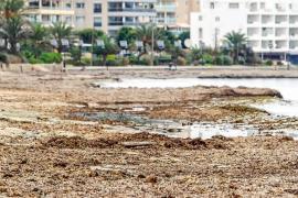 Posidonia y basura se acumulan en Platja d'en Bossa 12 días después del temporal