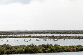 Un Parque Natural sin naturalista
