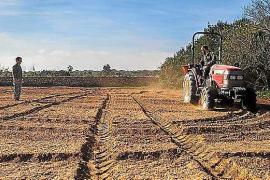 La Cooperativa del Camp de Formentera empieza la siembra de forraje en Can Parra