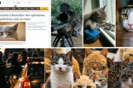 Twitter se llena de gatitos para apoyar la operación antiterrorista belga