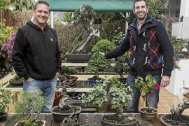 El apasionante mundo del bonsái con especies locales ibicencas