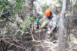 Sant Josep crea una faja antincendios de 2,2 hectáreas en Cala Vedella