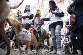 La Sanperrestre reúne a 1.000 personas con sus perros