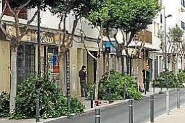 Vila inicia una campaña de poda y saneamiento de más de 300 ficus