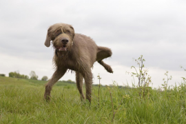 ¿Qué hacer si mi perro sufre incontinencia?