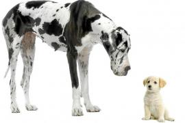 ¿Qué hacer si mi perro va a conocer a un nuevo cachorro o a un bebé?