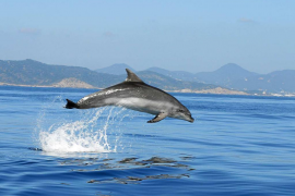 Mar Blava insta al Gobierno a acelerar la  protección del corredor de cetáceos