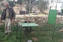 Sant Antoni instala trampas para los perros que atacan ganado en Sant Rafel