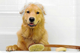 ¿Qué hacer si mi perro ha de bañarse?