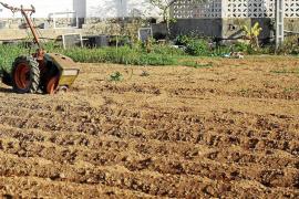 La falta de lluvias lleva al límite los cultivos de frutales y el pasto para el ganado en Eivissa