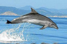 Mar Blava aplaude el apoyo del Parlament al corredor de cetáceos
