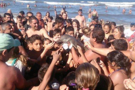 Decenas de bañistas matan a una cría de delfín al sacarla del mar para fotografiarla en Buenos Aires