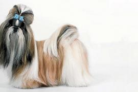 ¿Qué hacer si mi perro pierde mucho pelo?