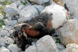 A 'Agustinet' le molestó que el Govern no le informara de la matanza de es Vedrà