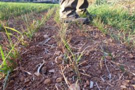 El Govern anuncia un incremento en las ayudas para paliar los efectos de la sequía