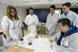 En busca del ADN de una medusa de plátano