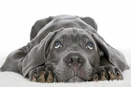 ¿Qué hacer si mi perro está deprimido?