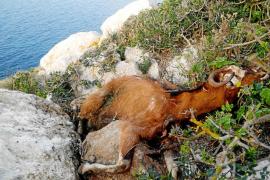 Un colectivo de veterinarios pide que se depuren responsabilidades por la matanza de es Vedrà