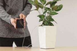 Unos jóvenes emprendedores presentan una maceta capaz de cargar el móvil