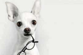 ¿Ven los perros y gatos igual que los humanos?