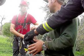 Los bomberos rescatan un perro caído en un pozo de Puig d'en Valls