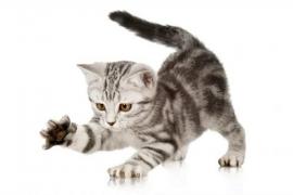 ¿Qué hacer si mi gato araña el sofá?