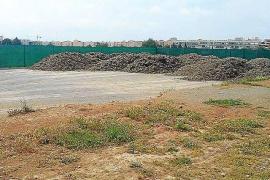 Vila habilita un solar de 2.000 metros cuadrados para la posidonia que se retira de las playas