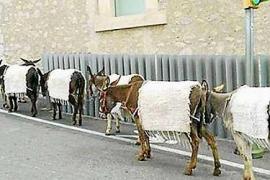 El Ayuntamiento de Eivissa, abierto a estudiar que no haya animales en la feria Eivissa Medieval