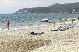 Empresas Matutes cede un solar a Sant Josep para almacenar la posidonia de sus playas