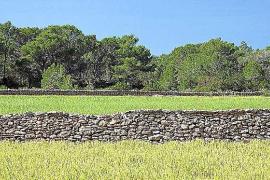 Formentera quiere declarar BIC la técnica de construcción de las paredes de piedra seca