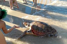 Cuatro tortugas muertas en una semana
