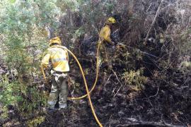 Un incendio quema 150 metros cuadrados de pinar en Cala Comte