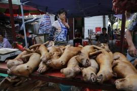 China recibe el verano con su mayor festival de carne de perro