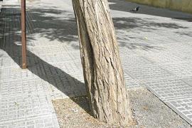 Expertos calculan en millares la población de serpientes en Eivissa y aconsejan sacrificarlas