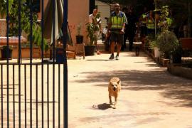 La 'operación Tarántula' finaliza con más de 15 detenidos en Palma y Valencia