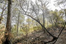 Sobresalto en Sant Mateu por un incendio que quemó 800 m2 de bosque