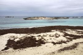 Denuncian a una embarcación por fondear sobre posidonia en pleno Parque Natural de Ses Salines