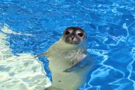 Imagen de una foca de Marineland