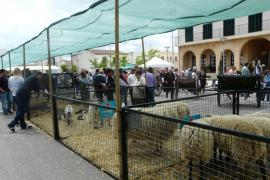 Sant Joan es el municipio más agrícola de Balears