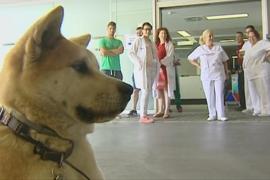 Una perra lleva 4 días a las puertas de un hospital a la espera de su dueña